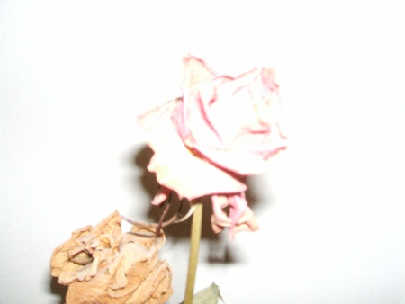 rosa_dramapessoal-blog.jpg